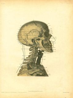 """nemfrog: """" Regional anatomy in its relation to medicine and surgery. George McClellan, M. The book consists of the author's photos made of cadavers dissected by him expressly to teach anatomy. Anatomy Reference, Drawing Reference, Berlin Techno, Medical Science, Photo Illustration, Creepy, Medicine, Antiques, Drawings"""