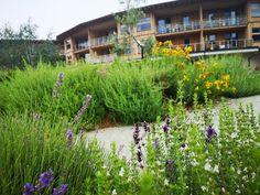 Wanderurlaub in Niederösterreich: Molzbachhof - The Chill Report Austria, Plants, Hotels, Hiking, Plant, Planets