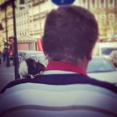 Patkány a buli? #csudapest #budapest #nyolcker #jozsefvaros #hungary #televanavárosszerelemmel #budapestnyáronsokkalszabadabb