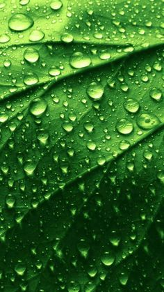 Types Of Photography, Macro Photography, Landscape Photography, Nature Iphone Wallpaper, Rain Wallpapers, Green Leaf Wallpaper, Colorful Wallpaper, Photographie Macro Nature, Green Nature