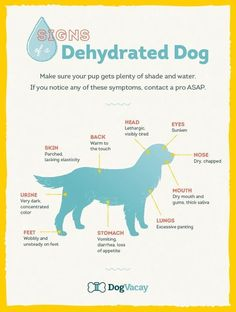SIGNS - DEHYDRATED DOG