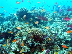 Plongeurs néophytes, débutants, et passionnés du Grand Bleu, ceci est pour vous. Pour préparer vos prochaines vacances ou tout simplement rêver d'une escapade sous-marine, voici notre sélection des plus beaux spots de plongée de la