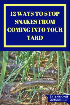 12 Ways to Stop Snakes From Slithering Into Your Yard Compost Maker, Compost Tea, Plant Tissue, Sandy Soil, Annual Flowers, Clay Soil, Organic Matter, Potting Soil, Types Of Plants