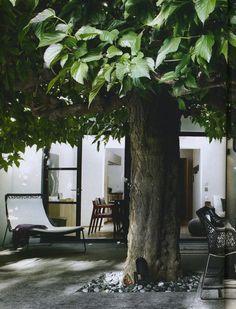 Courtyard trees