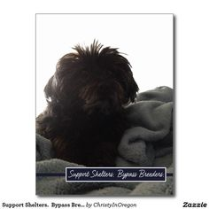 Support Shelters.  Bypass Breeders. Postcard