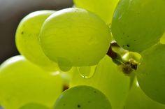 Free stock photo: Grapes, Fruits, Healthy, Fruit - Free Image on Pixabay - 1280860
