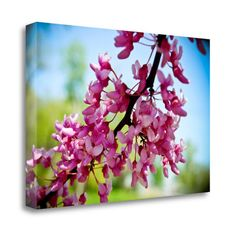 Tangletown Fine Art 'Spring Redbud' by Amber Berninger Photographic Print on Wrapped Canvas