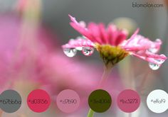 paleta de colores 3 especial octubre