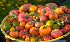 Four reasons to grow heirloom plants