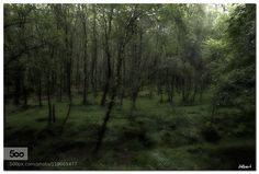 Llum al bosc - Light in the forest by Holandes_Errant