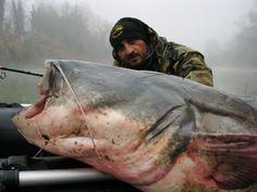 エクエスで釣り上げられた巨大ヨーロッパオオナマズ