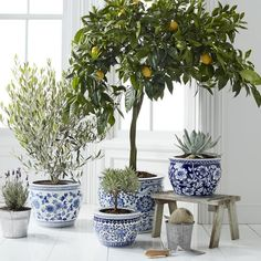 Absolutely stunning blue and white tableop designs you can easily implement. Get inspired with easy to copy blue and white table top design. Hanging Plants, Indoor Plants, Indoor Gardening, Large Ceramic Planters, White Table Top, Table Top Design, White Planters, Blue And White China, White White