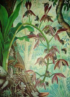 Olímpia Reis Resque: Agosto 2013Orquídeas F. C. Hoehne. Álbum de orchidáceas brasileiras e o Orchidário do Estado de São Paulo. 1930.