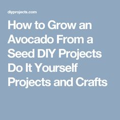 How to Grow an Avocado From a Seed DIY Projects Do It Yourself Projects and Crafts