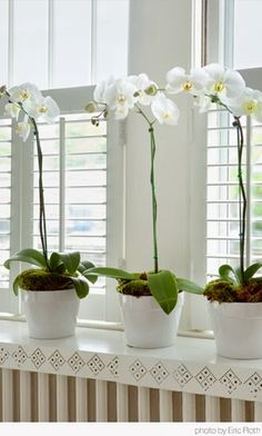 Paixão Por Orquídeas!por Depósito Santa Mariah