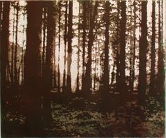'Forest 2 County Mayo ' 2006 Etching & Aquatint by Paul Walker