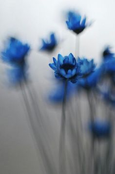 Blue flowers - Plants and foliage outdoors. Trees, plants, glowers and gardening.