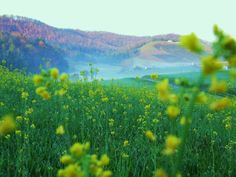 Idlewild Rd in spring....