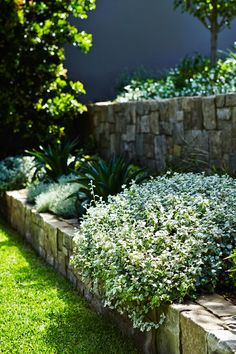 stone walls used to create tiered structured garden design on sydneys lower north shore
