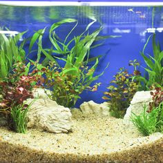 The correct aquarium lighting is necessary to illuminate and show off the exciting additions to your tank. It is an important part of the décor of an aquarium and can pull the focus of a room right to your tank or even pull the room's interior decorating into an easily finished state. 5 Gallon Aquarium, Glass Aquarium, Aquarium Kit, Led Aquarium Lighting, Aquarium Design, Planted Aquarium, Fish Breeding, Nano Tank, Aquariums