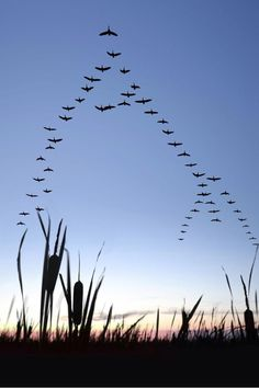 mirella @miremg  ·  26 nov Se gli uccelli sono i primi pensieri del mondo,il colore di quei pensieri dev'essere il colore dell'alba @TwoReaders