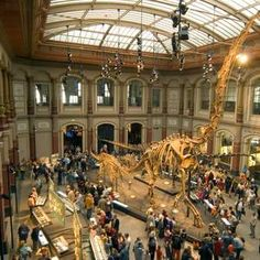 Natural History Museum Berlin - largest dinosaur skeleton in the world