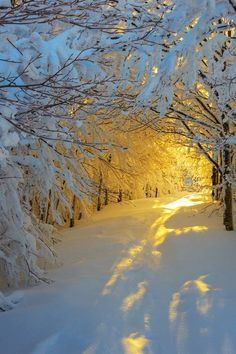 Sunrise in the snowy wood
