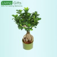 Plants In Gurgaon Plant Nurseries Gift A Online