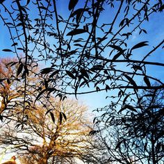 """#wintersun #trees"" Photo taken by @erminepoort on Instagram"