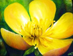 Print of Original Oil Painting  Buttercup by NaturalDetails1, $20.00