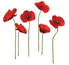 RoomMates RMK1729GM Poppies at Play Peel and Stick Giant Wall Decals by RoomMates, http://www.amazon.com/dp/B005C5SMYE/ref=cm_sw_r_pi_dp_Li-Irb0W4MH7N