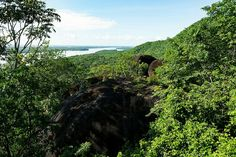 Nature. Boa Vista, Brazil.
