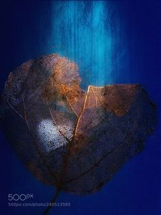 Through my Heart (Jenny Haritou / Chalkida / Greece) #LG Electronics LG-D605 #macro #photo #insect #nature