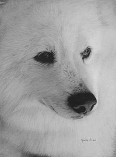beautiful pencil Beautiful pencil drawings by Randy Hann Pencil Drawings Of Animals, Realistic Pencil Drawings, Art Drawings, Charcoal Drawings, Drawing Animals, Beautiful Pencil Drawings, Amazing Drawings, Chalk Ink, Sketch Inspiration