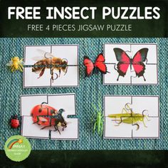 FREE Insect/Arachnid Toob Printable Puzzle by Pinay Homeschooler Shop Butterfly Body Parts, Insect Body Parts, Red Butterfly, Insect Activities, Animal Activities, Spring Activities, Printable Puzzles, Printables, Montessori