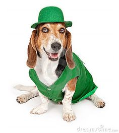 Cute dog photos and funny dog photos of a variety of dogs dressed in green who are ready to celebrate St. Patrick's Day. Funny Dog Photos, Cute Dog Pictures, Cute Funny Dogs, Bloodhound Dogs, Basset Hound Dog, Best Dog Halloween Costumes, St Patrick's Day Outfit, Dog Varieties, Bassett Hound