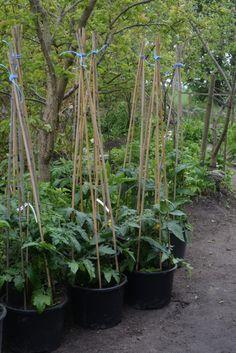 Bokashi, My Secret Garden, Grow Your Own, Outdoor Life, Kraut, Garden Inspiration, Flora, Plants, Hem