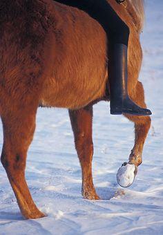 Winter Horse Hoof Care