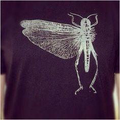 The locust shirt