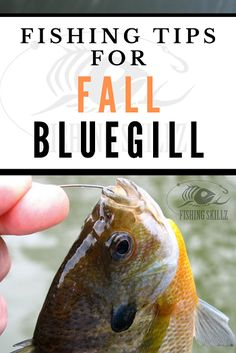 5 Fall Bluegill Fishing Tips (For Catching More Bluegill!) - Fishing Skillz Just because the warm summer months are over doesn't mean you have to put the fishing rods away just yet. If you love bluegi Trout Fishing Tips, Walleye Fishing, Carp Fishing, Fishing Lures, Fishing Rods, Fishing Tricks, Stand Up Fishing Kayak, Sport Fishing, Best Fishing
