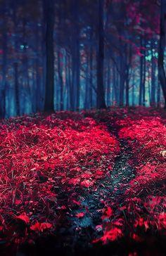 zen and the art of darkness