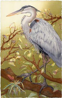 "Barbara Groenteman -   I'm Lookin' Good, Too (Great Blue Heron)  Watercolor on Paper  framed 42"" x 32"""