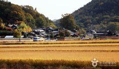 금빛 닭이 알을 품고 있는 형상의 풍수지리 명당, 경북 봉화 달실마을