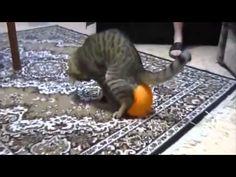 Top 10 Funny Cat Videos - http://tericat.com/top-10-funny-cat-videos/