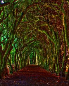 If i went 4 a walk here with a hot guy, i would feel like a princess!!! would'nt u???
