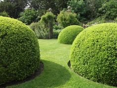 Giant buxas topiary balls at Wollerton Old Hall