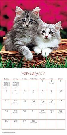 Buy your 2018 Cuddly Kittens mini calendar from Purrfect Gifts Online today! Cat Calendar, Kitten Love, Kittens, Cats, Online Gifts, Mini, Stuff To Buy, Animals, Cute Kittens