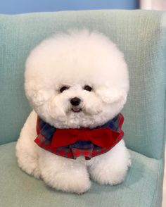 Lyna Youtube, Dog Best Friend, Cute Dogs And Puppies, Dog Grooming, Cute Baby Animals, Shih Tzu, Poodle, Fur Babies, Dog Cat