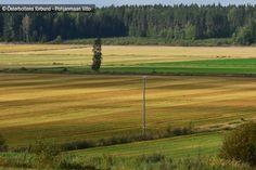 Odlingslandskap - Viljelysmaisema
