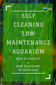 Self Cleaning Aquarium. How to make a self-sustaining aquarium biosphere, How They Work and Why You May Want a Self-Cleaning Low Maintenance Aquarium.